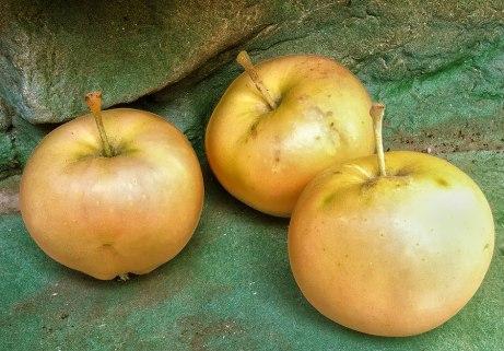 apples091914