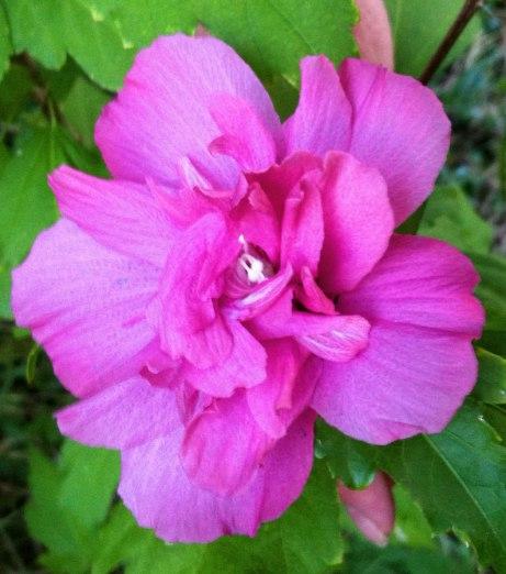 roseSharon083114