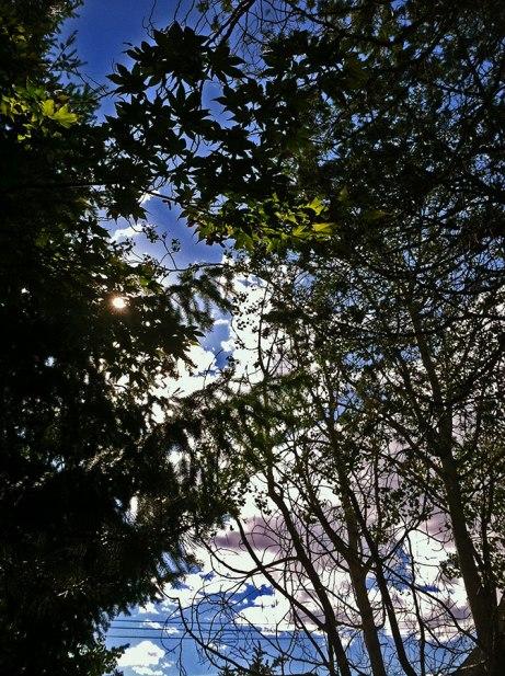 trees090114