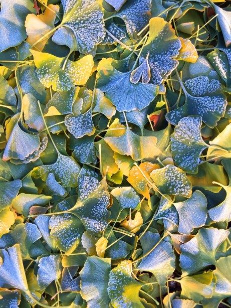 leaves111714