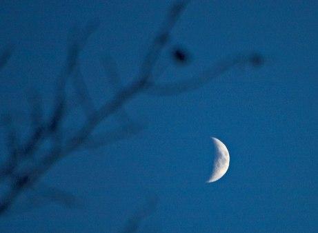 moon112714
