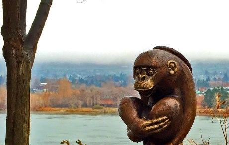 monkey120914