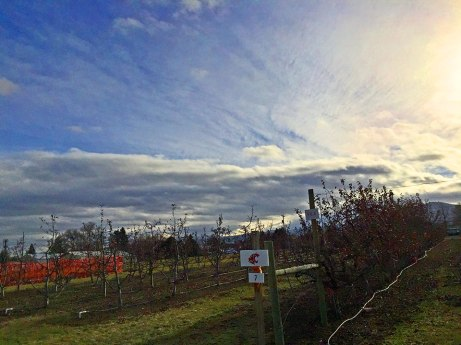 orchard122314