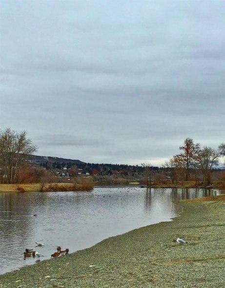 ducks011515