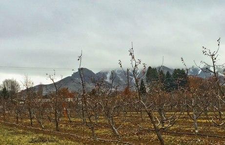 orchard020515